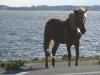 Another pony!
