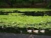Lily pond next to the beach