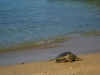 More turtles!
